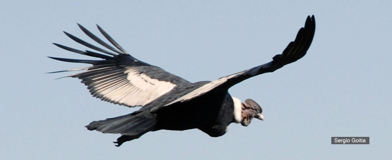 Resultado de imagen para condor